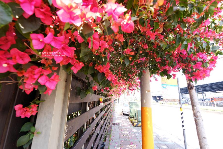 20180317000442 65 - 桃紅浪漫九重葛花牆點綴了公車站.等車也很唯美