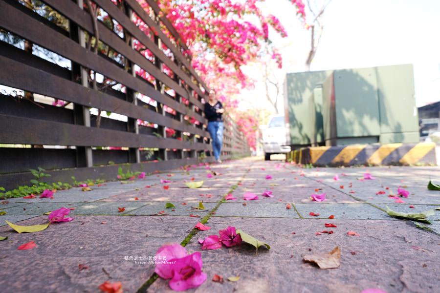 20180317000444 55 - 桃紅浪漫九重葛花牆點綴了公車站.等車也很唯美