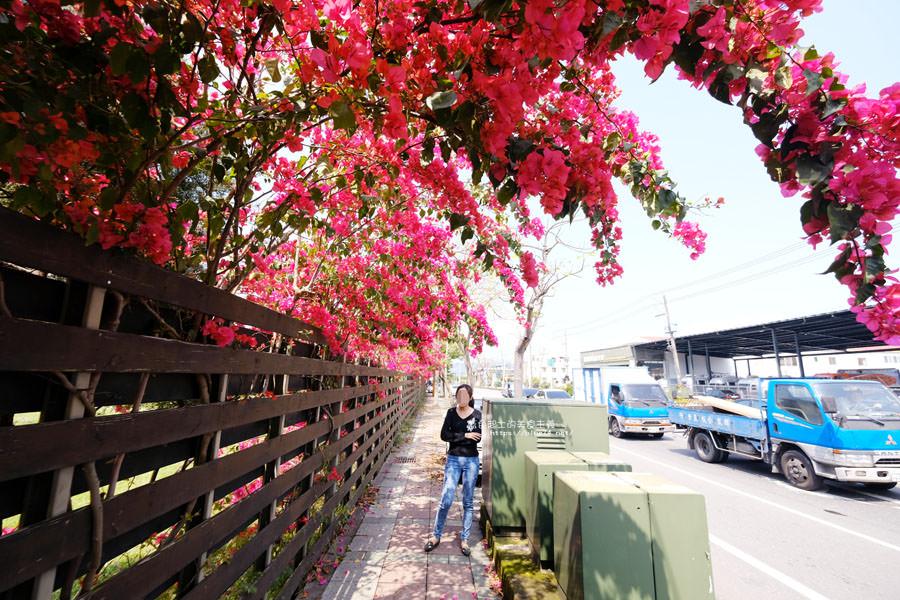 20180317000445 56 - 桃紅浪漫九重葛花牆點綴了公車站.等車也很唯美