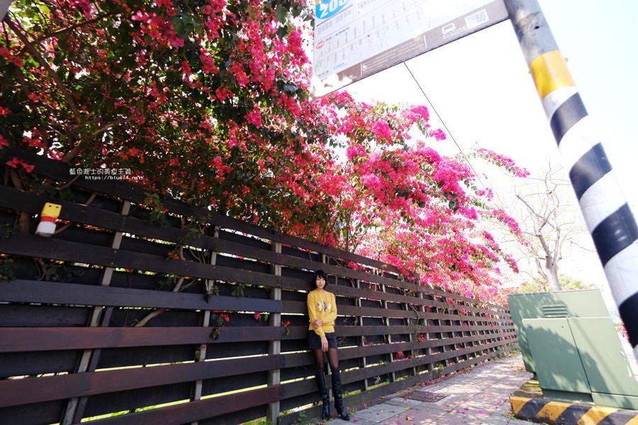 20180317000459 65 - 桃紅浪漫九重葛花牆點綴了公車站.等車也很唯美