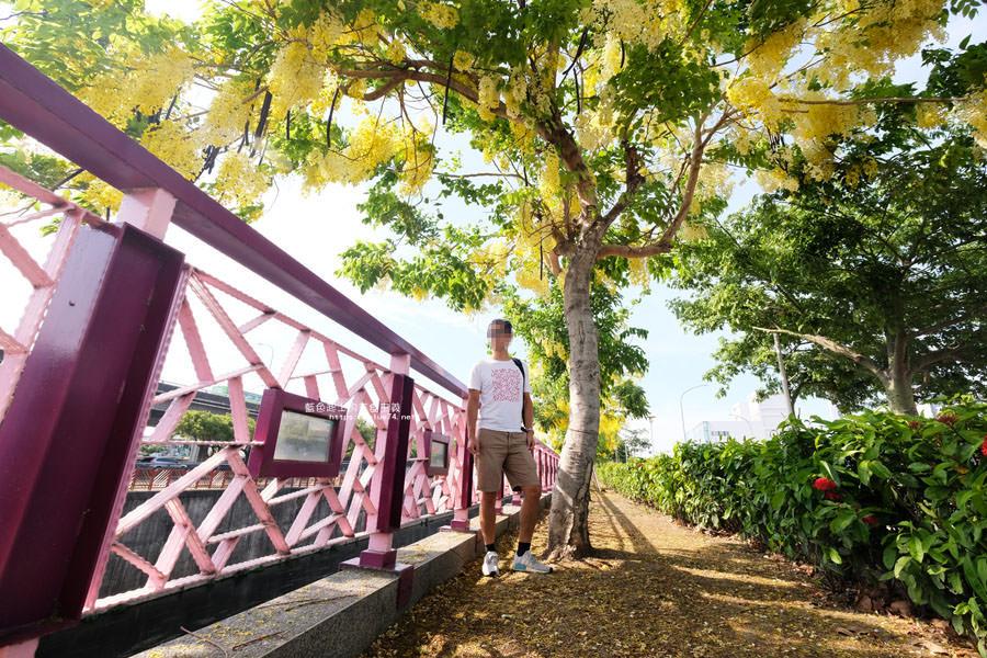 台中南屯│南屯區阿勃勒-金黃色花串和粉紅欄杆構成好看打卡點