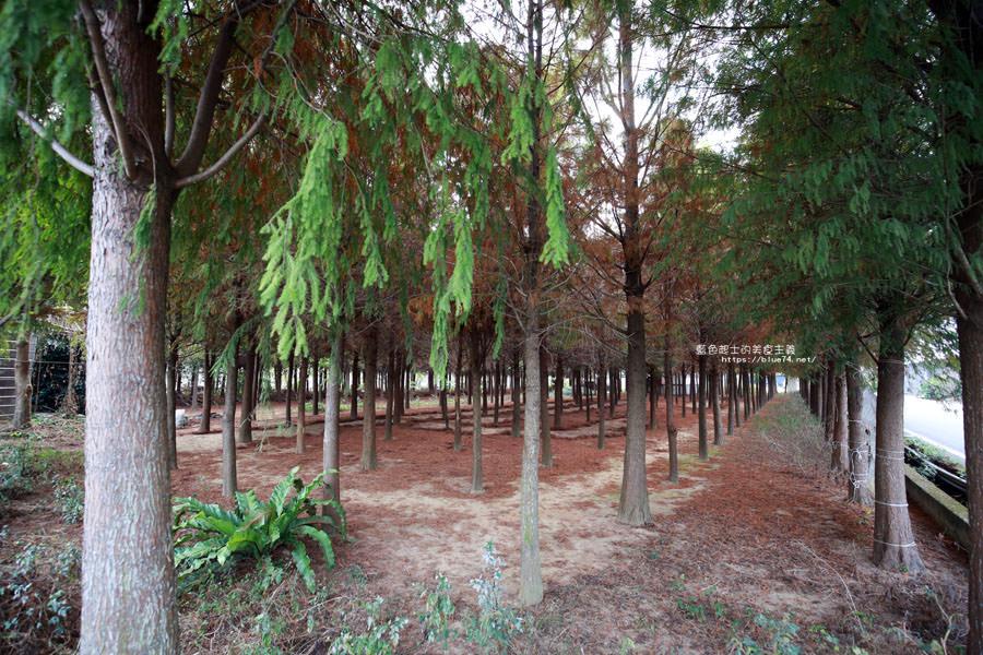 20181120231028 7 - 新社水井落羽松森林-整齊乾淨落羽松林,已鋪上落葉紅毯