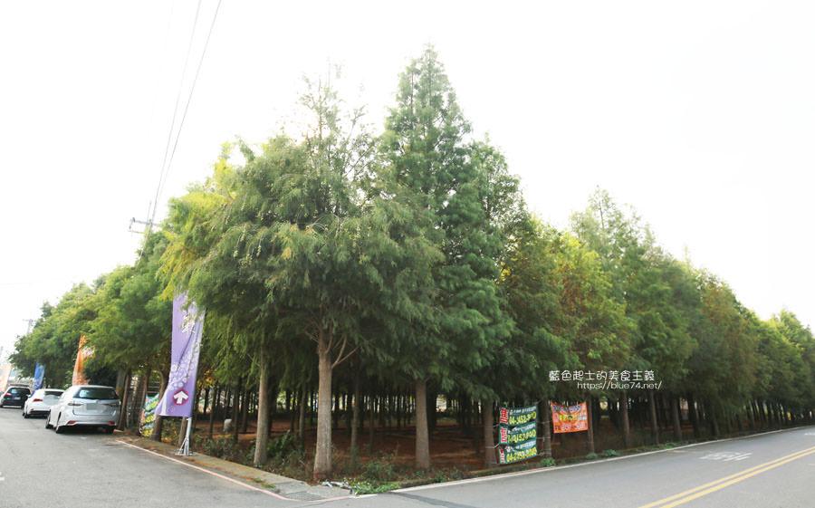 20181120231115 55 - 新社水井落羽松森林-整齊乾淨落羽松林,已鋪上落葉紅毯