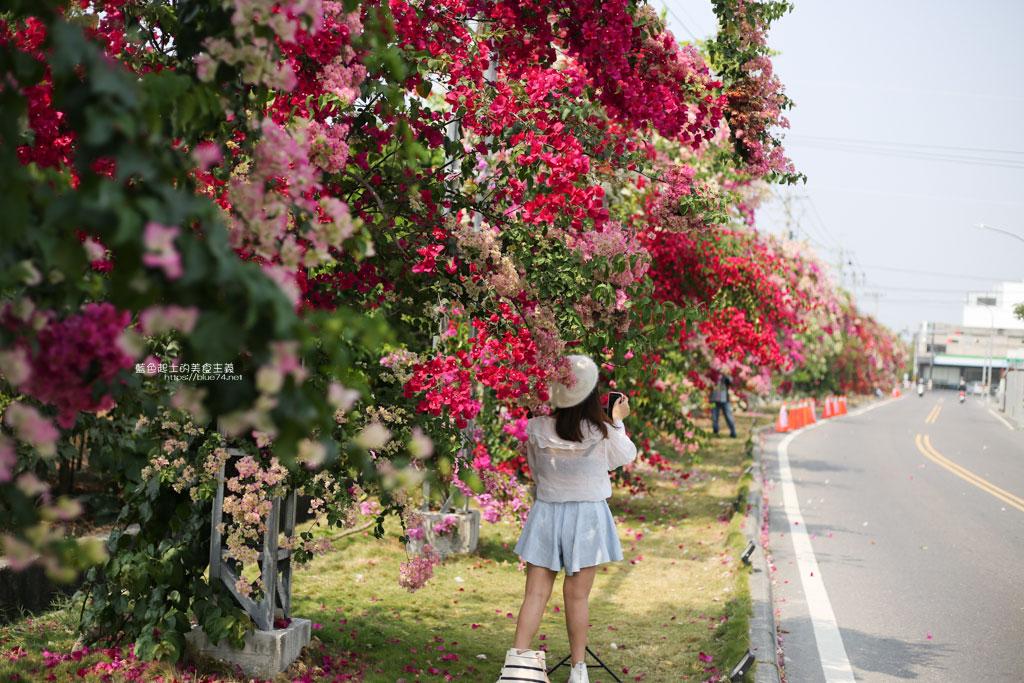 彰化田中│田中九重葛花海瀑布牆-色彩繽紛,浪漫花卉廊道