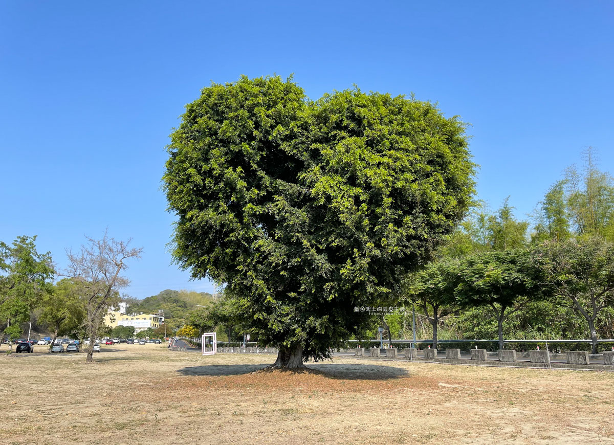 彰化大村│大葉大學愛心樹-超大顆愛心樹,連車子都可以一起入鏡