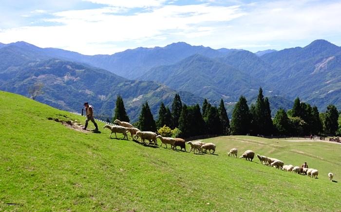 【南投.清境】- 夏日避暑趣.彷彿置身瑞士的清境農場綿羊秀&馬術秀