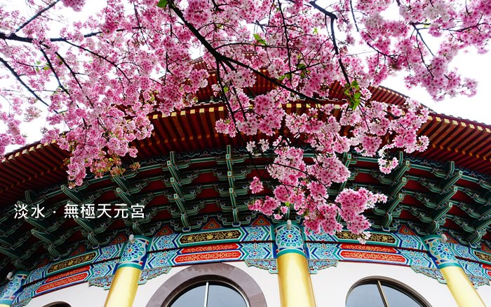 【新北.淡水】- 最後的櫻花盛宴.淡水無極天元宮 (2015.03.21花況)