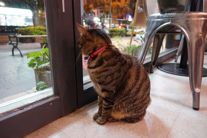 【食記】MONO CAFE.貓咪店長來坐檯 @ 科技大樓站