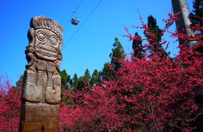 【南投.魚池】- 九族文化村櫻花祭.5000顆八重櫻浪漫迎新春(2015.02.14花況)