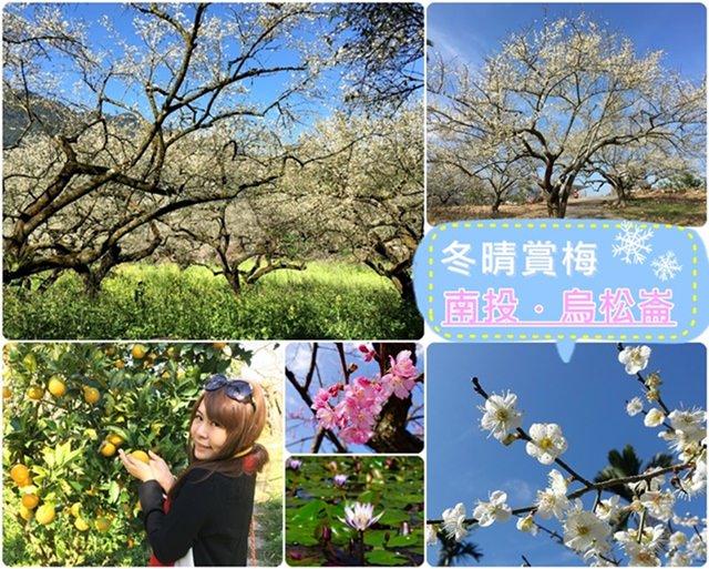 【南投.信義】- 冬晴賞梅好去處.烏松崙石家梅園 (2016.01.09花況)