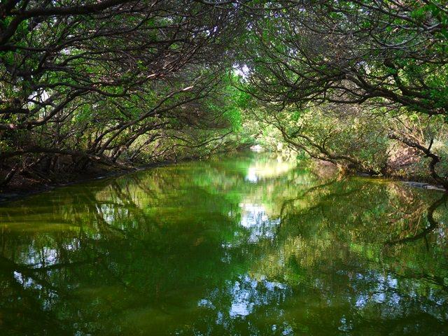【台南.輕旅行】- 台版小亞馬遜河 ~ 四草紅樹林綠色隧道