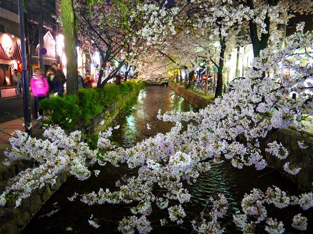 【13 春遊.櫻之關西 】- DAY2 光與櫻花下的漫步 高瀨川夜櫻