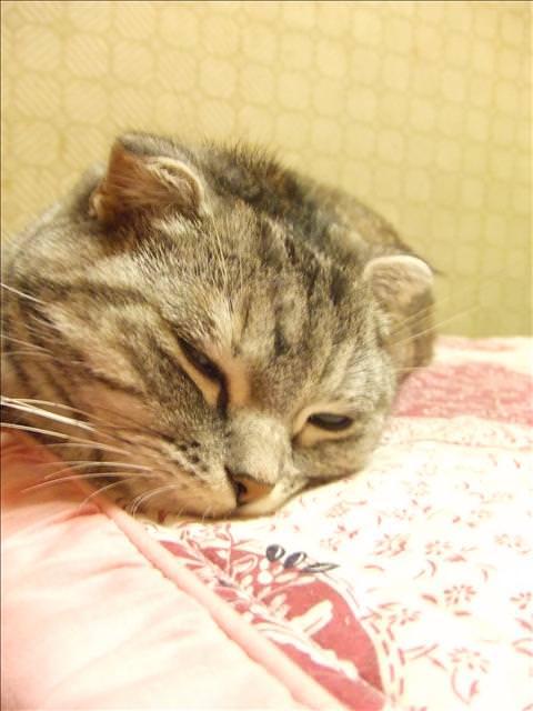 【寶貝】麵麵3歲了~~生日快樂!!!