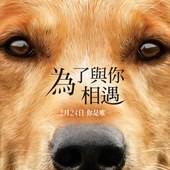 Movie, A Dog's Purpose(美國) / 為了與你相遇(台) / 一条狗的使命(中) / 再次相遇(港), 電影海報, 台灣