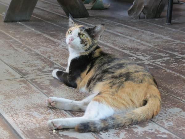 賢妻之廚房(ครัวแม่ศรีเรือน), 小貓