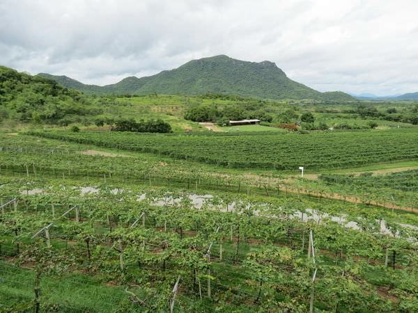 華欣葡萄園酒莊(Hua Hin Hills Vineyard), 葡萄園