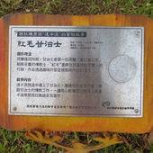 嶺頂公園, 公共藝術, 紅毛甘治士