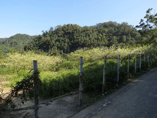 阿柔洋產業道路, 李花園