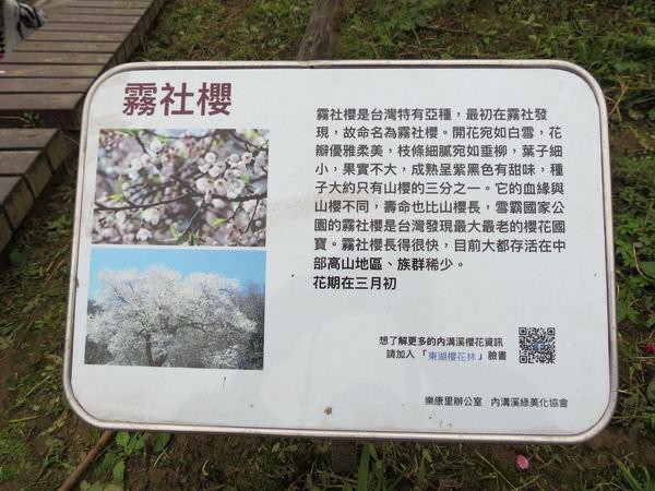 內溝溪自然生態步道, 樂活公園, 第一區, 霧社櫻