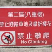 內溝溪自然生態步道, 樂活公園, 第二區, 八重櫻
