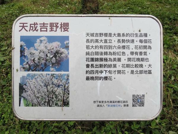 內溝溪自然生態步道, 樂活公園, 第二區, 天成吉野櫻