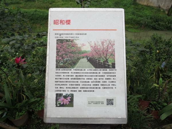 內溝溪自然生態步道, 樂康步道, 昭和櫻