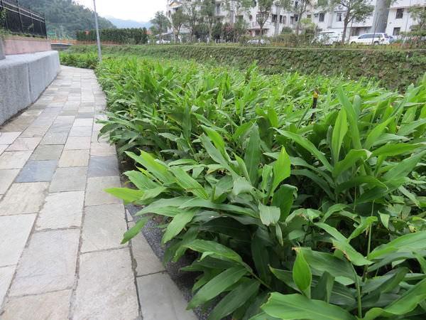 內溝溪自然生態步道, 五分埤