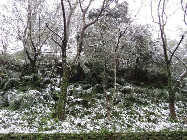 台北下雪記:汐平追雪-10