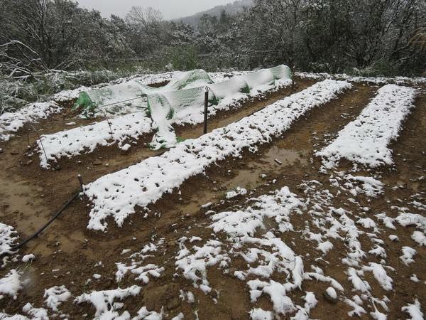 台北下雪記:汐平追雪-12
