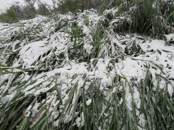 台北下雪記:汐平追雪-13