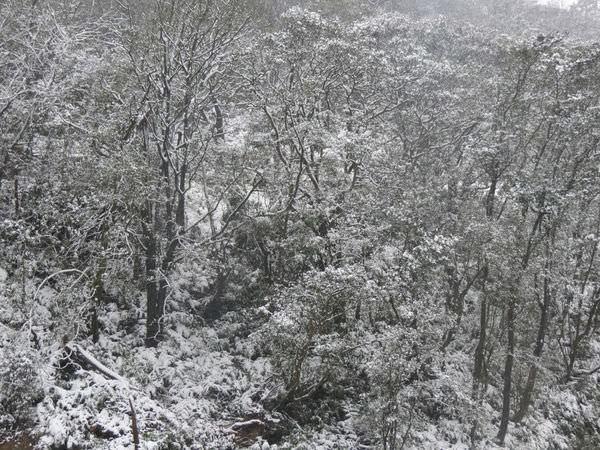 台北下雪記:汐平追雪-17
