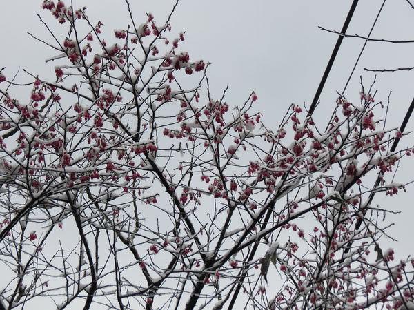 台北下雪記:汐平追雪-24