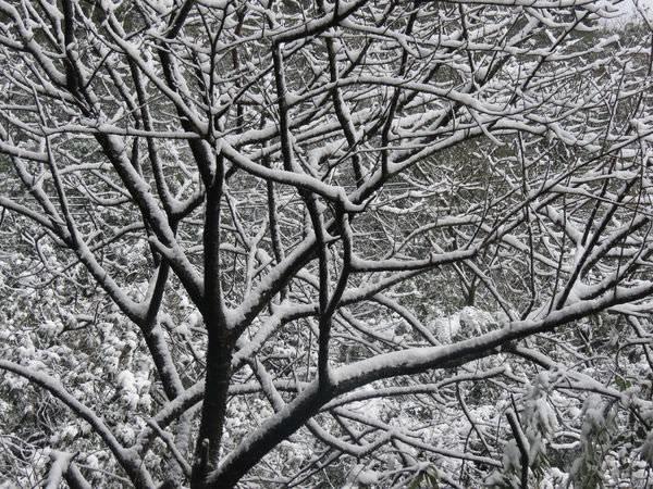 台北下雪記:汐平追雪-27