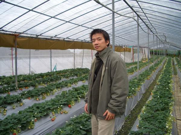 內湖採草莓 60
