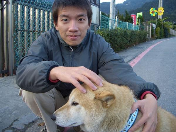陽明山竹子湖 06-一個花圃前遇到的可愛的柴犬