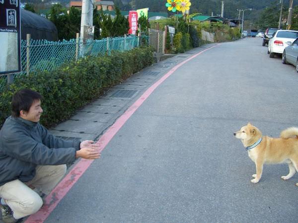 陽明山竹子湖 09-不小心用手軸碰到他,他就不理我了