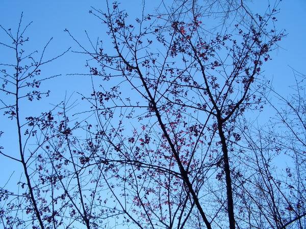 陽明山竹子湖 14-樹下往上拍,想對照竹子圖