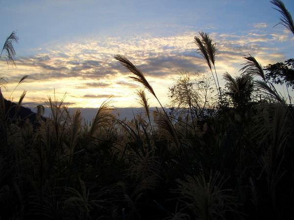陽明山竹子湖 20-管芒,此季節已難看到一片的管芒花海,外加背景實在漂亮