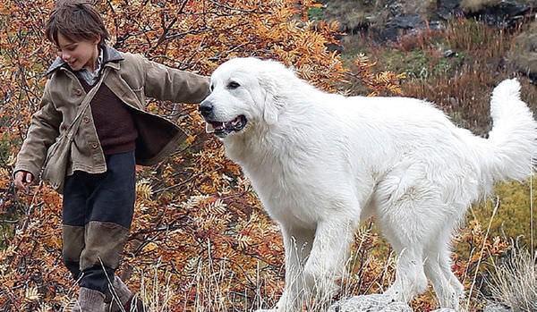 Movie, Belle et Sébastien / 靈犬雪麗 / 灵犬雪莉 / 我和貝貝的歷險, 電影劇照