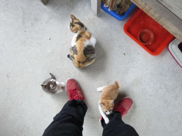猴硐貓村, 小貓咪