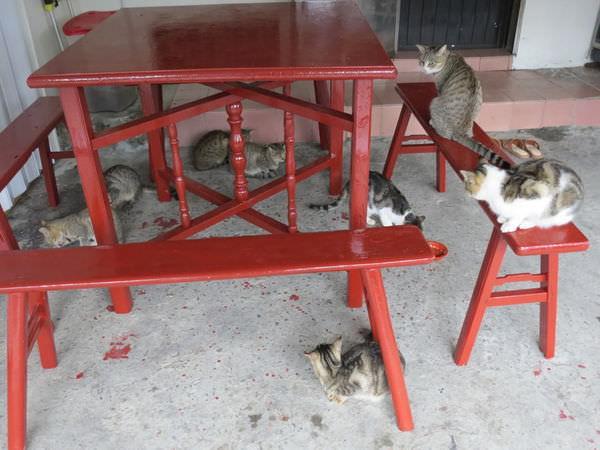猴硐貓村, 貓咪