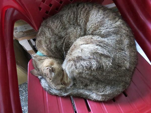 猴硐貓村, 貓咪睡覺