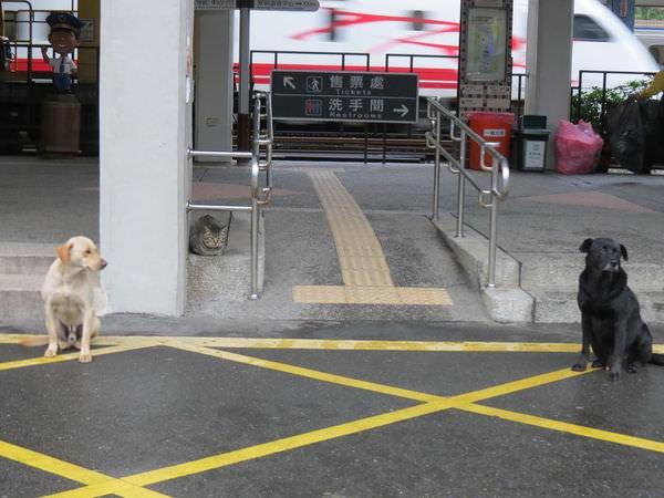 猴硐貓村, 小狗