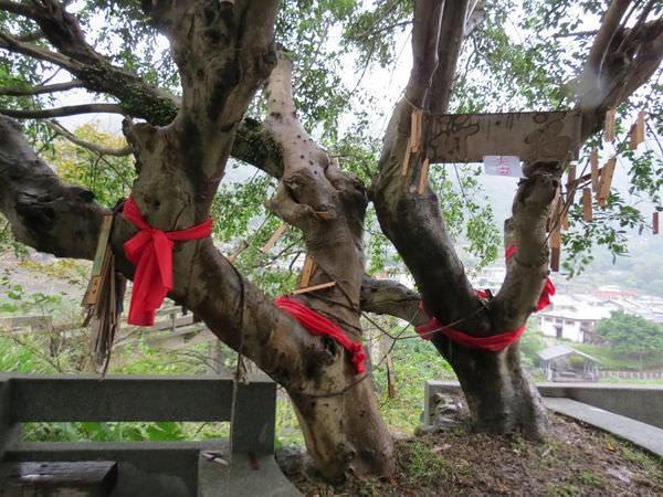 猴硐貓村, 夫妻樹