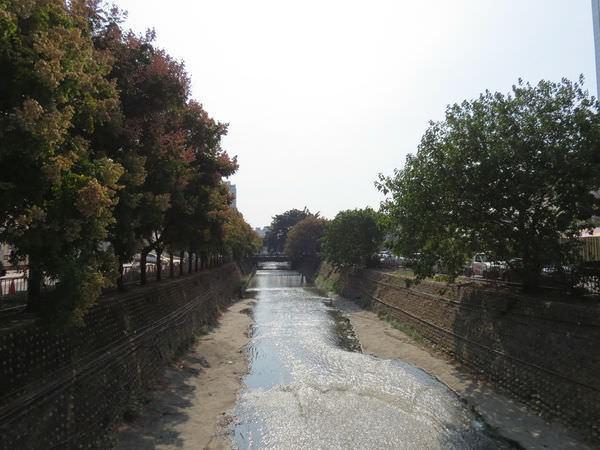 台灣欒樹, 內新庄仔溪排水溝