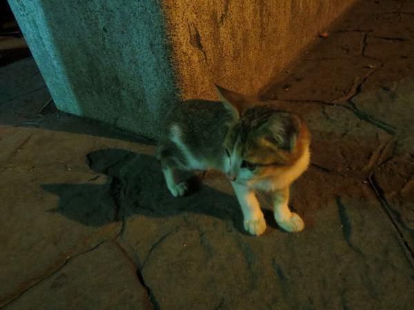 靜安橋, 小貓咪