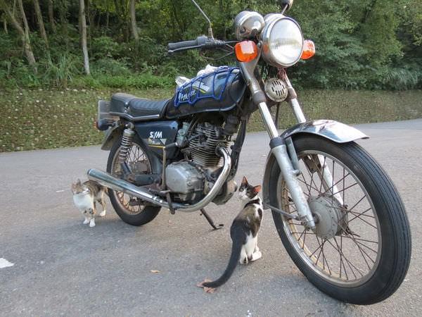 巧遇小貓咪, 台北市, 南港區, 舊莊路二段