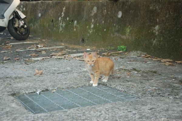 烏來內洞愛打鬧的小狗&小貓, 新北市烏來區