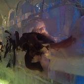 冰原奇跡-史前巨獸.長毛象特展, 長毛象化石