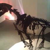 冰原奇跡-史前巨獸.長毛象特展, 劍齒虎化石